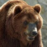 Нападение медведя на человека в Томской области