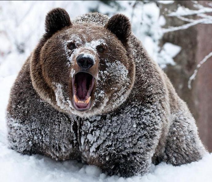 Судьба медведя
