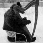 Медведь пианист
