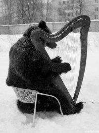 музыкальные медведи
