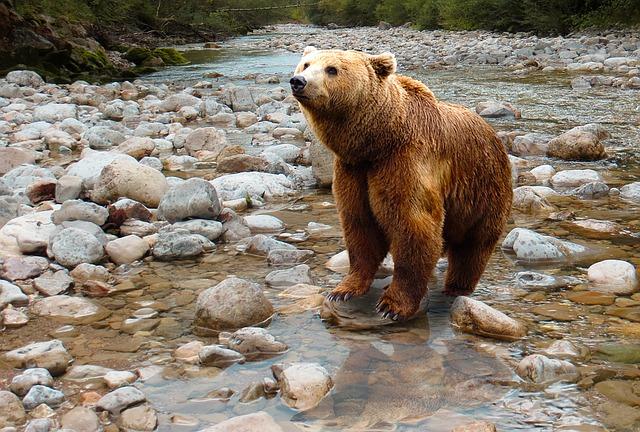 можно ли спастись от медведя на реке
